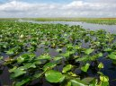 the-florida-everglades-have-been-referred-to-as-the-most-threatened-park-in-the-us-too-much-water-the-introduction-of-new-species-and-urban-development-are-all-part-of-the-problem