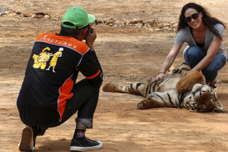 thailand-tiger-temple-popular-with-tourists-feb-2016